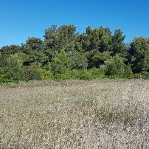 Il Parco di Punta Pizzo