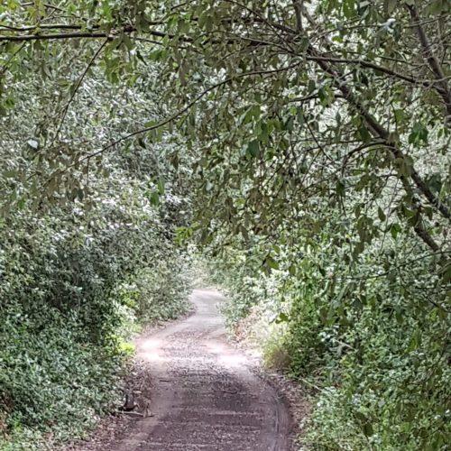 Un sentiero nel lecceto