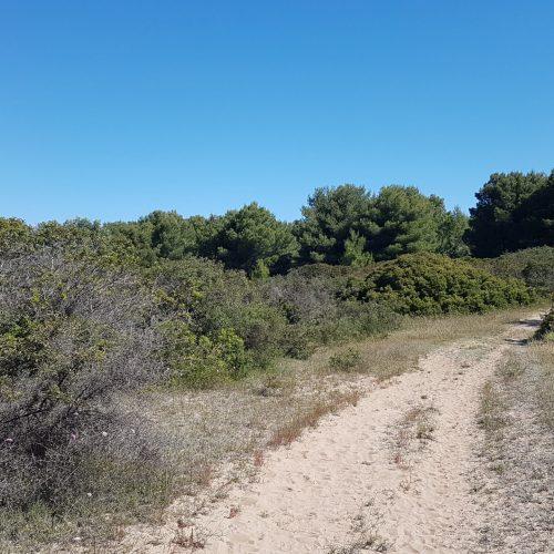 Un sentiero sabbioso nel Parco di Punta Pizzo