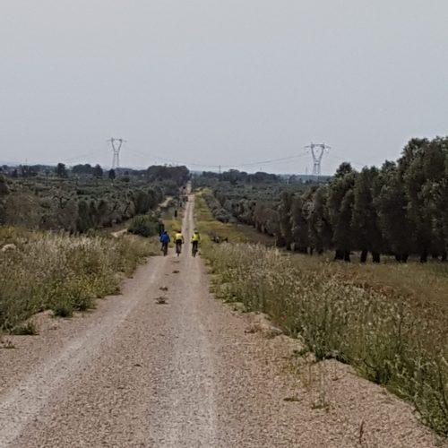 La lunga pista fra gli ulivi