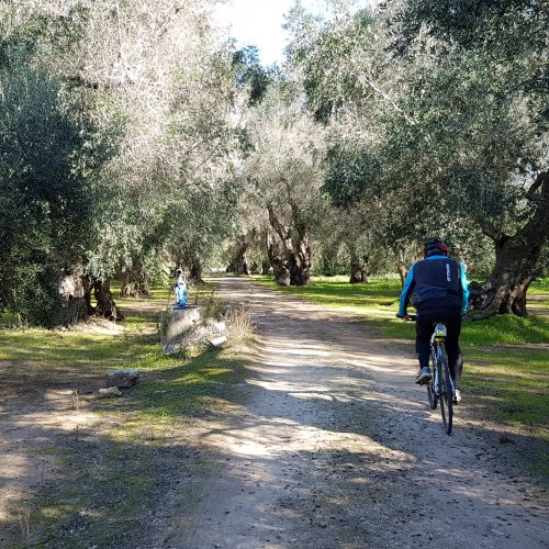 Fra gli ulivi vicino Scorrano
