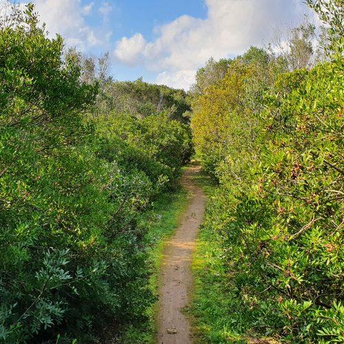 Il sentiero verso Cerrate